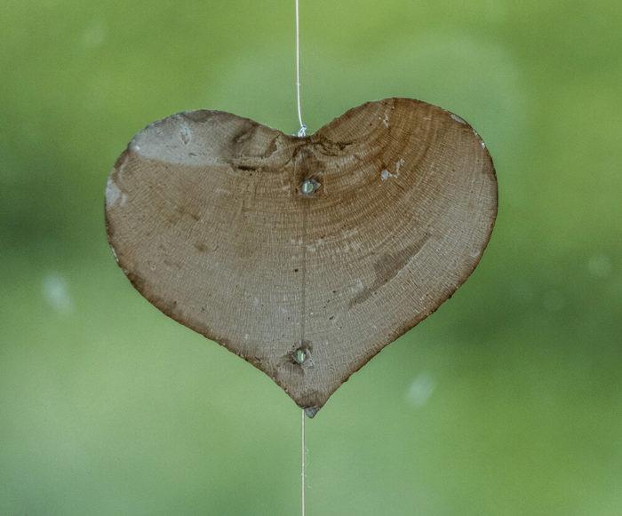 heart-1665157_1920